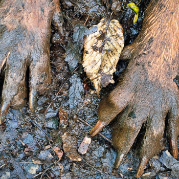 J and R's Carpet Cleaning-Muddy Dog Paws