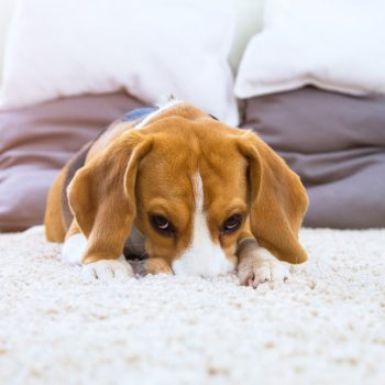 Hypoallergenic Carpets - J and R's Carpet Cleaning